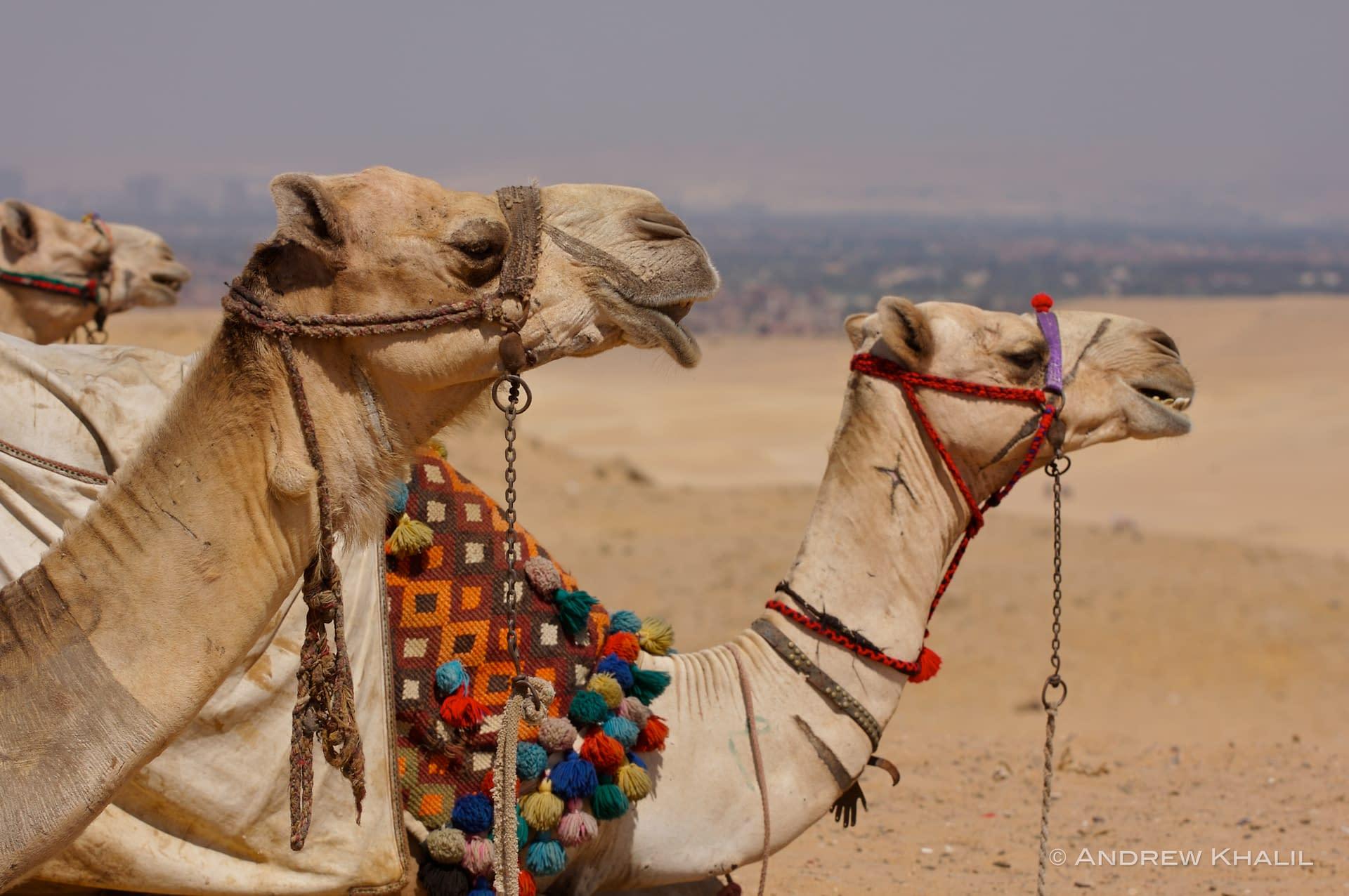 Egypt – Terrestrial